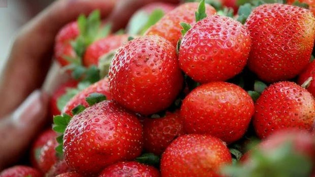 Strawberries for sale at mahabaleshwar